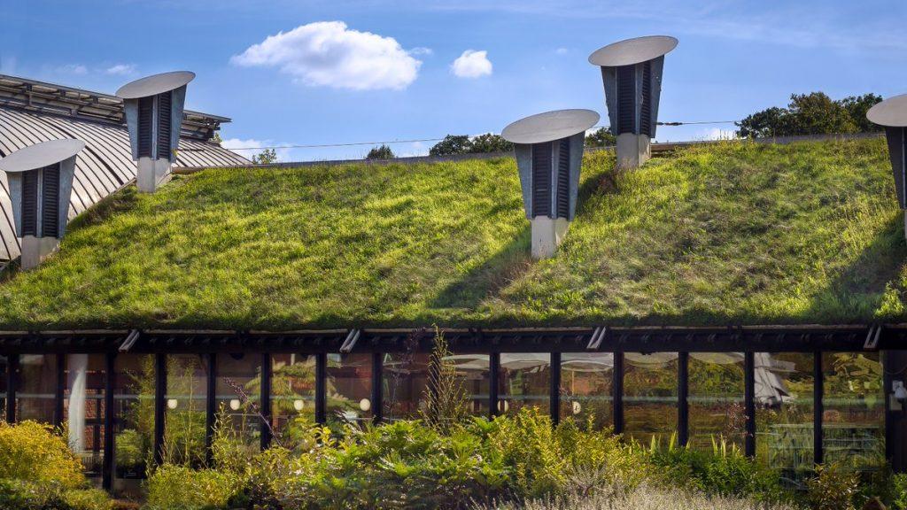ekologiczny zielony dach