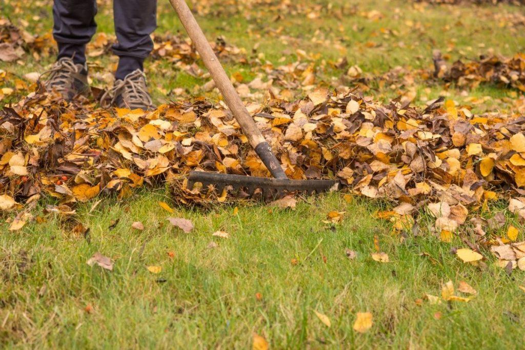 Pielęgnacja trawnika w ogrodzie po użyciu glebogryzarki z wypożyczalni BMK Rzeszów